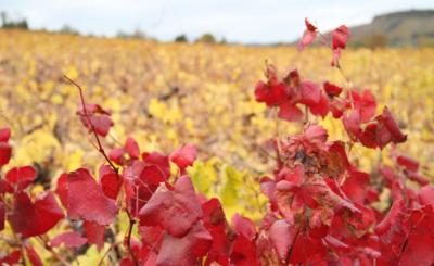 Peique, tres generaciones de gran vino
