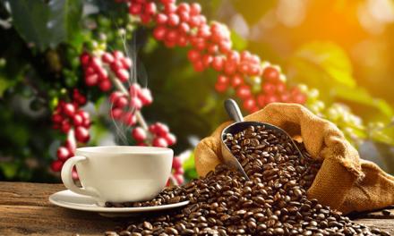 El café, la estrella del comercio justo