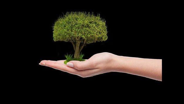Un llamamiento a la sostenibilidad, con #UnArbolPorEuropa